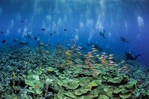 Learn the thrill of Drift Diving with Us