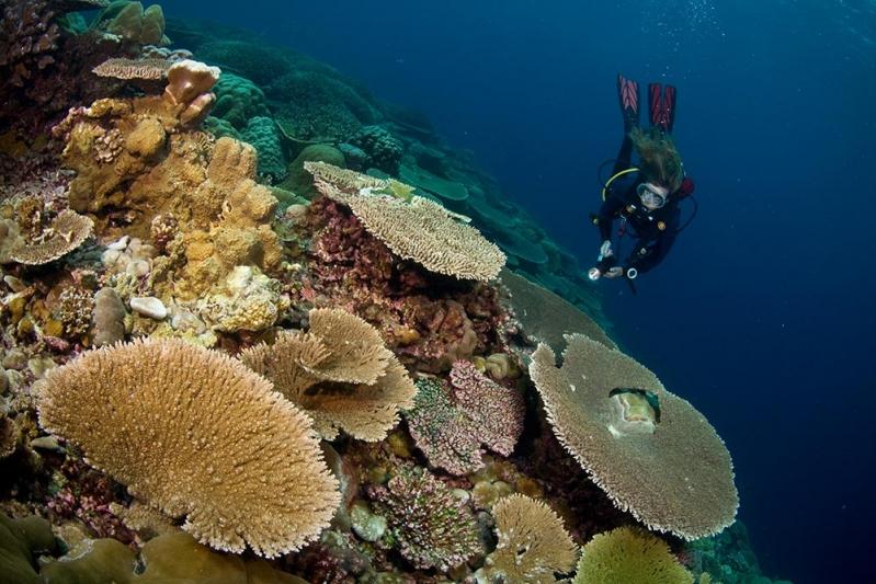 Christmas Island Diving