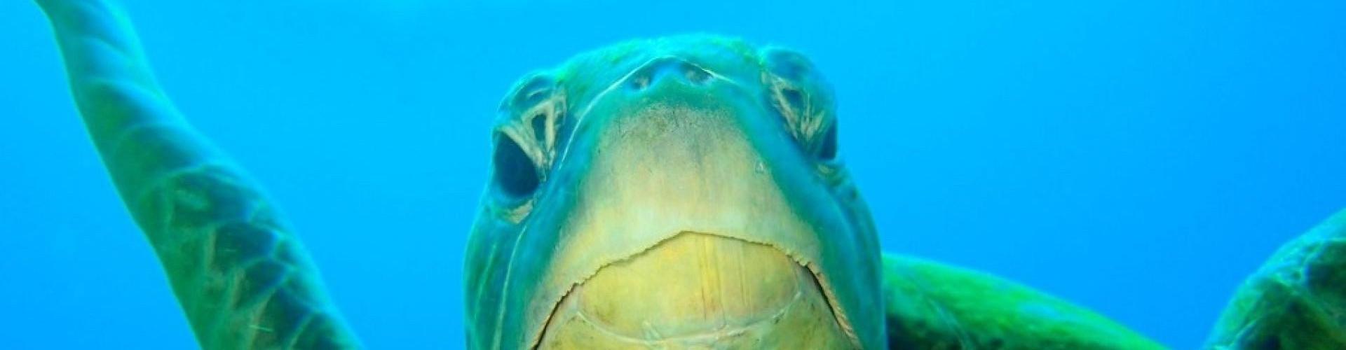 3-Become a Scuba Diver